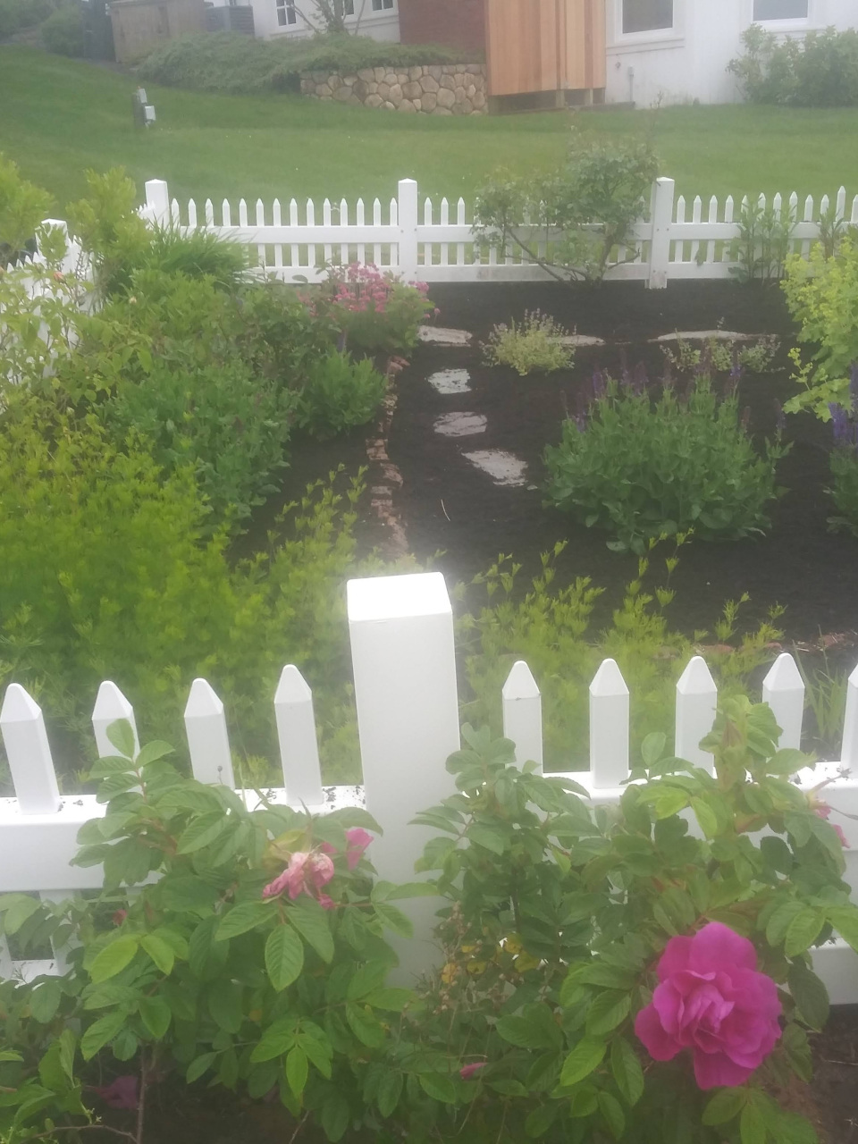 White fence with roses growing on it and garden with rock paths